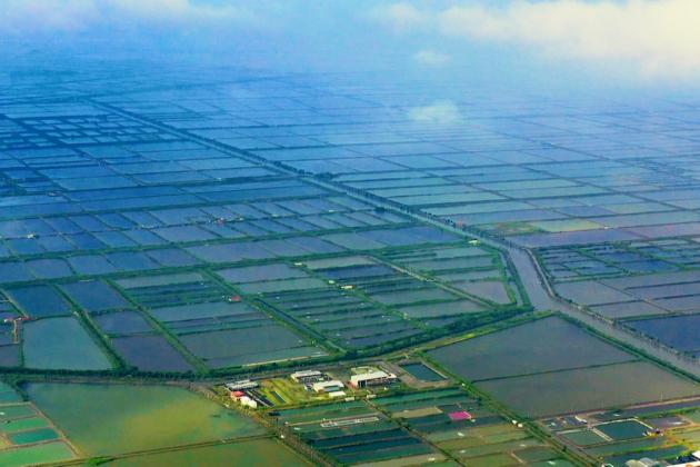 漁電共生計畫延伸高雄 台綠宣布在永安區建60公頃專區